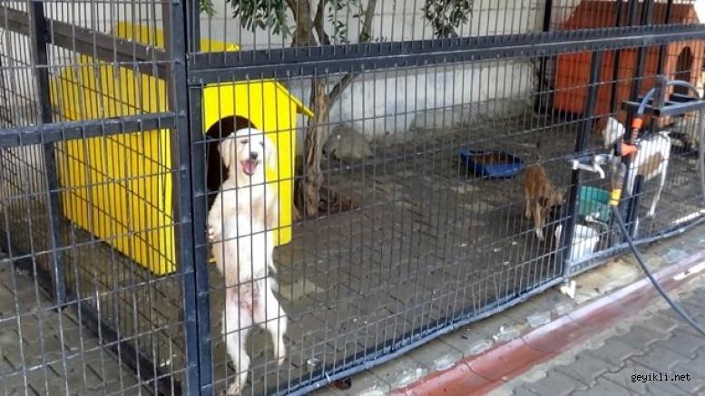Geyikli'de yazlıkçıların terk ettikleri hayvanlara belediye sahip çıktı